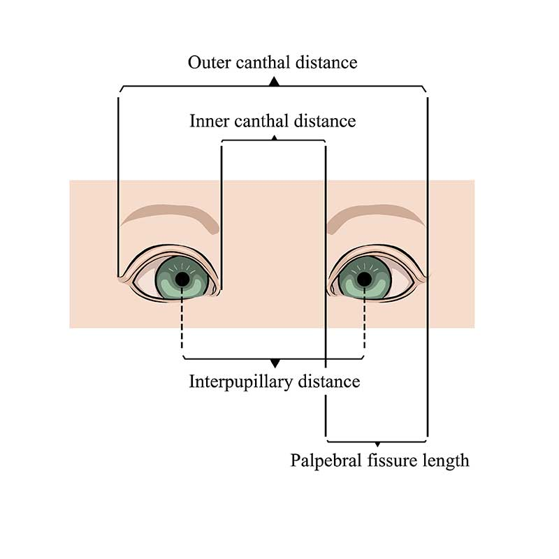 illustrazione della distanza interpupillare